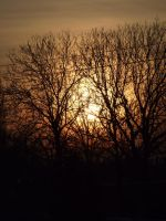 sunset over the trees by gold-paroles