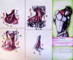 Personal anatomical studies with artistic referenc by ANDREAMARINO93