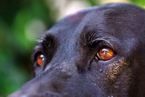 brown eyed boy by sumahli