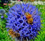 bees on blue by Mittelfranke