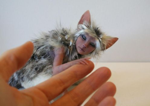 Silver Tabby by pixiwillow