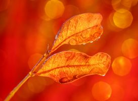 Golden Leaves by ian-roberts