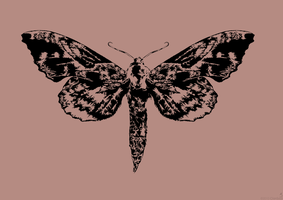 Another moth. by kaolincash