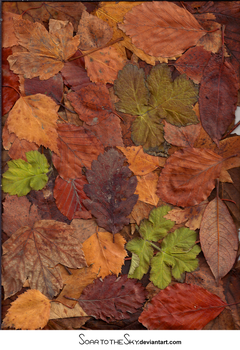 RESOURCE Autumn leaves 1 by SoarToTheSkyTexture
