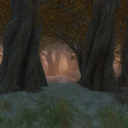 GamePhotoProject - 40# The forest by LucienWittwer