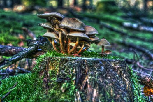 Shrooms by Azph
