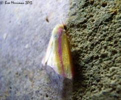 Unknown Moth by BreeSpawn