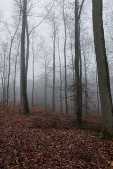 Foggy Forest 23 by sacral-stock