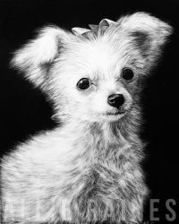 Pixie - Scratchboard by AllieRaines