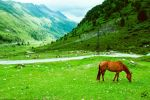 grazing horse by Man90Ray