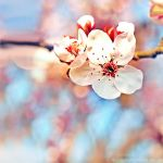 spring... by impatienss