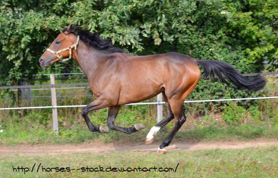 Justification - Stock 14 by Horses--Stock
