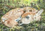 The Fawn - ACEO by Carol-Moore