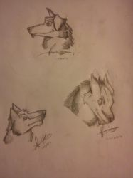 Wolf Bust Practice - One by deathgliger