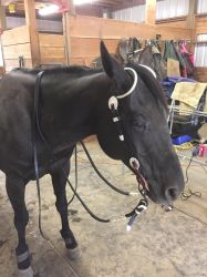 Show bridle stock 6 by Stripe13
