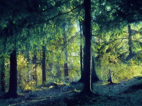 Forest 4 by PhotoFrama