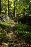 Forest path by Chihire-stock
