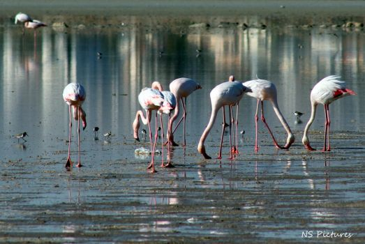 Flamingos 2 by Poolbandit