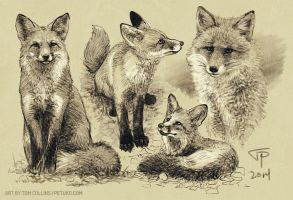 Warmup Foxes by Pyrosity