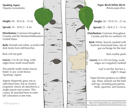 Science Fact Friday: Aspen or Birch? by Alithographica