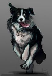 Full body border collie coloured sketch by Mad--Munchkin