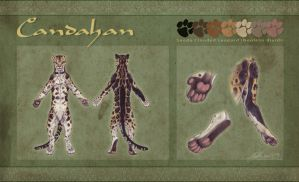 Reference Sheet - Candahan by BloodhoundOmega