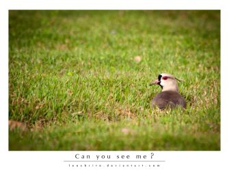 Hello, Can You See Me? by leocbrito