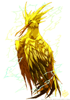 PKM: Zapdos Used Thunder Shock!