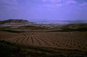 Wine Growing - Prov. Zaragoza - Spain by Woscha