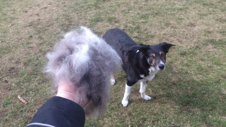 I brushed my dog today by Nikolad92