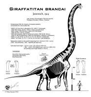 Giraffatitan brancai hi-fi skeletal by Paleo-King