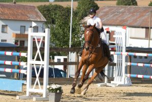 Show Jumping Refusal Series 12 by LuDa-Stock