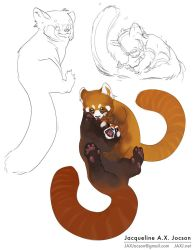 Red Pandas! by monsterling