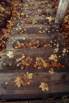 Autumn stairs by even1ngtale
