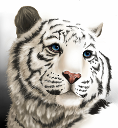 White Tiger by Opium01