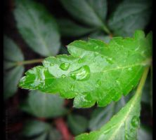 Water Droplets 365 by caybeach