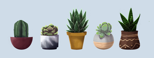 Succulents by Ocny