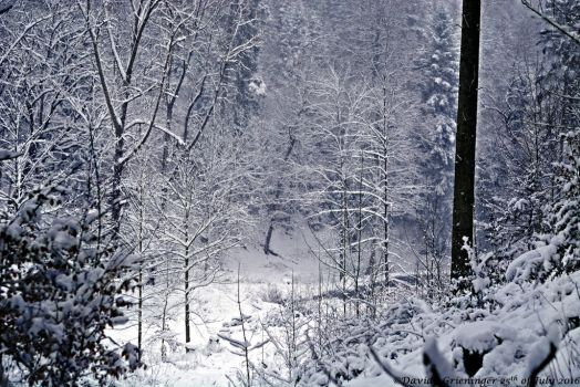 Winter Wonderland II by DavidGrieninger
