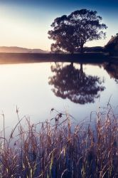 Reeds and a Tree Reflected by nathanspotts