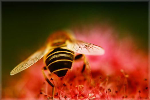 Buzzzy bee. by hot4may