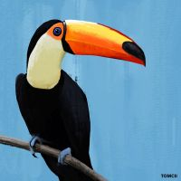 Toucan by Tom-Cii