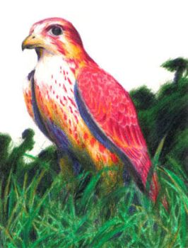 Tetradic Falcon by waterlilly
