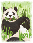 pandas for charity by mybirdy