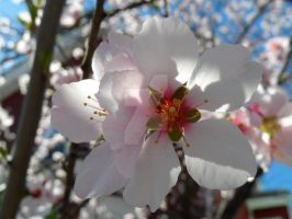 Signs of Spring in the City2  2012 by GoodGirl-BadGirl