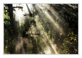Sunray in forest by pixiegal