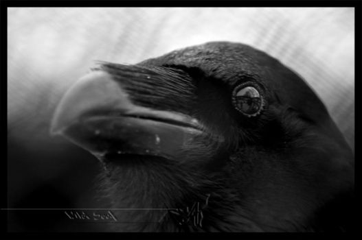 Nevermore by Wild-Soul