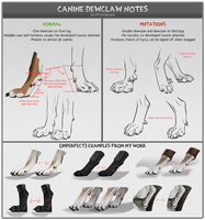 Canine dewclaw notes by Chickenbusiness