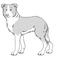 Border Collie by iMoiety