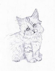 Norwegian Forest Cat   Pencil Drawing by TheMasterofSuicide