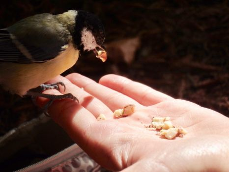 The chick and chickadee by Squirrels2poet2queen
